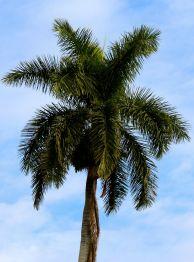 "Palm trees say ""Florida"""
