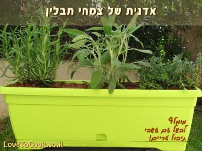 מתנה לחג: אדנית צמחי תבלין