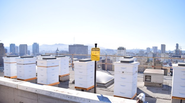 Rooftop Bee Sanctuary at the Clift Hotel, San Francisco - photo credit: CLIFT Hotel