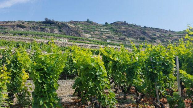 Sion Domaine du Mont d'Or vineyards with steep terraces - Credit: Deborah Grossman