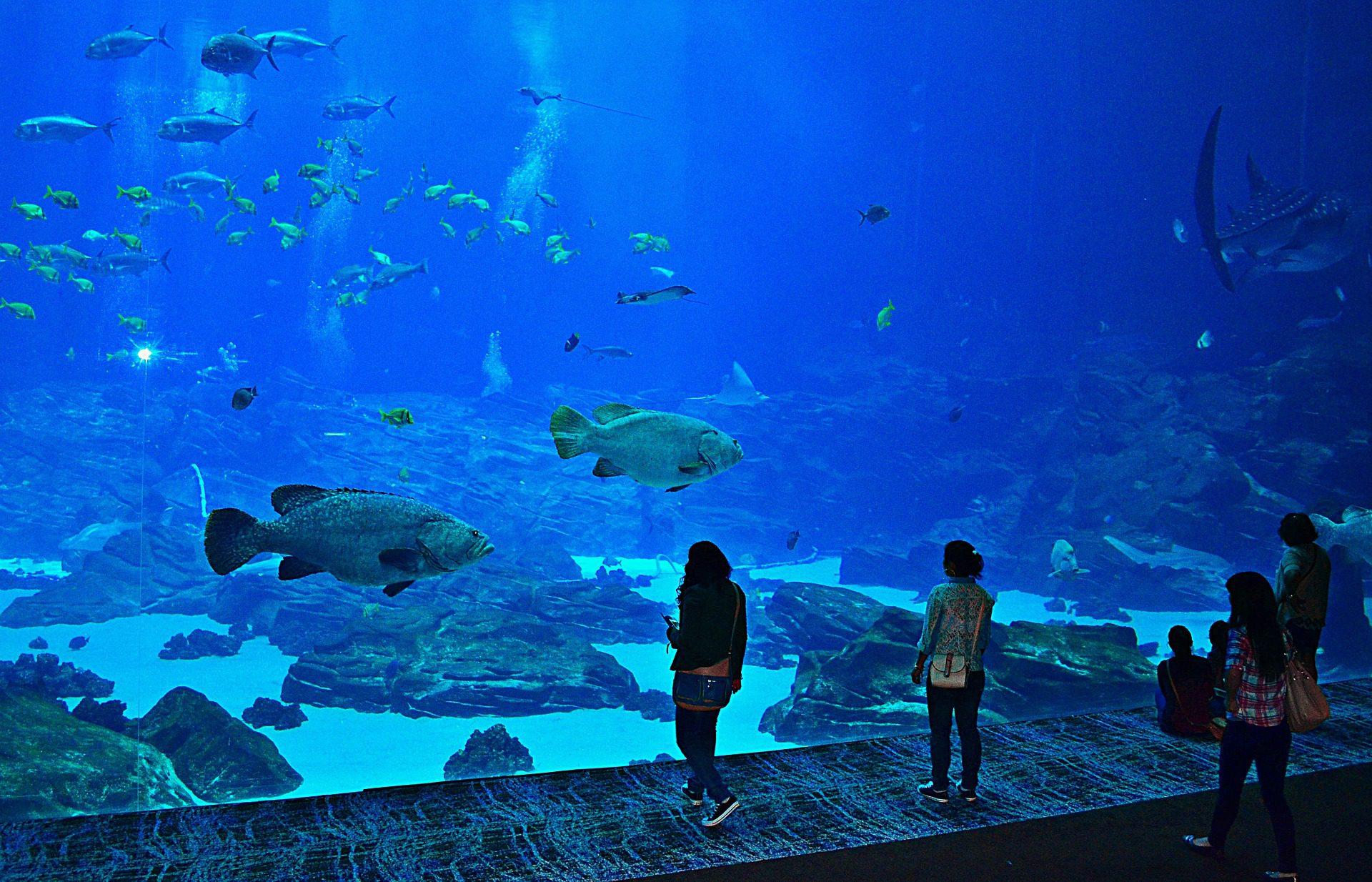 Atlanta Aquarium, Atlanta, GA