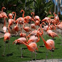 San Diego Zoo, San Diego, CA Flamingos