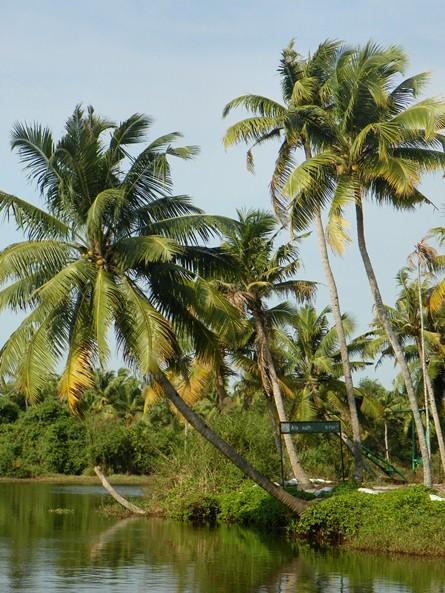 Заводи Кералы