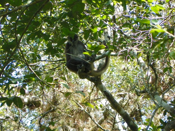На обратном пути еще удалось понаблюдать за семейством обезьян