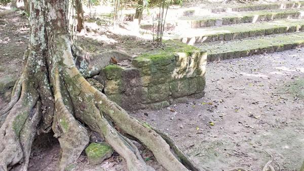 Calakmul. Mexico (25)