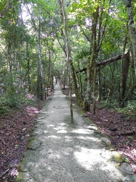 Calakmul. Mexico (6)