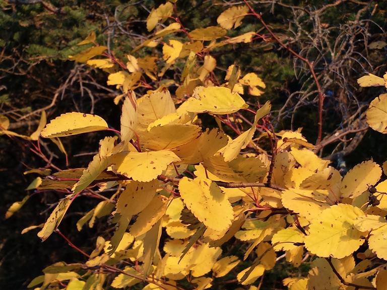 Fall in Riding Mountain