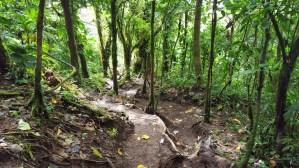 Cerro Chato Trail (13)