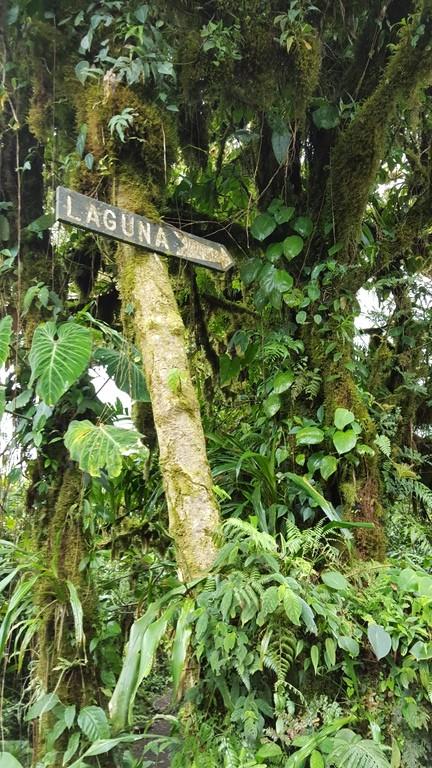 Cerro Chato Trail (16)