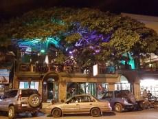 Santa Elena. Tree House