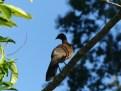 Caribbean wildlife (5)