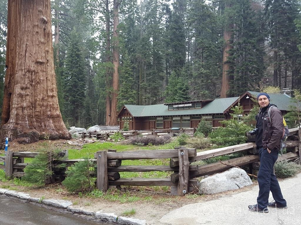 Sequoia NP (20)
