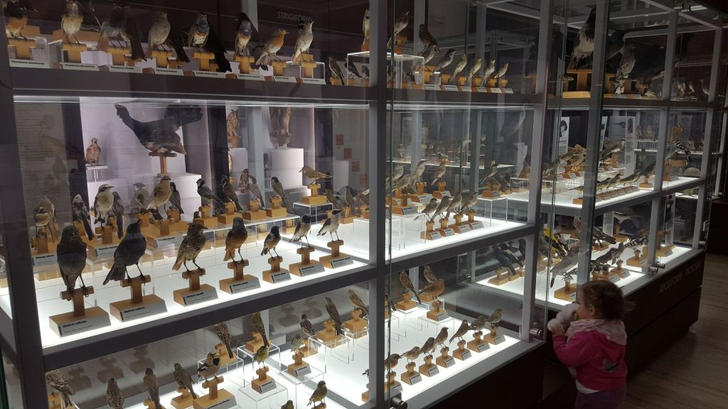 Love Trentino - Museo di Scienze e Archeologia di Rovereto