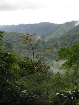 Facts about Rwanda, where is rwanda, africa safaris, rwanda safaris, tours in Rwanda, tour Rwanda,Gorilla tours in rwanda, Rwanda gorilla safaris, Wildlife safaris in Rwanda, Gorillas in Rwanda