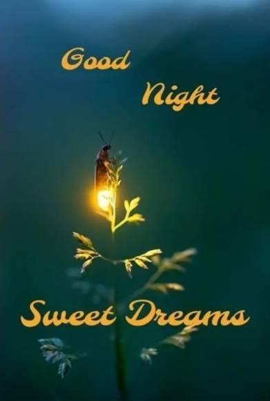 Good-Night-Sweet-Dreams-Images
