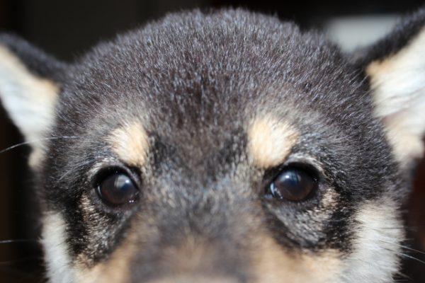犬 メロン 量 注意点
