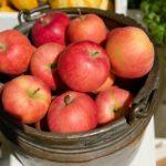 りんご 下痢 アレルギー