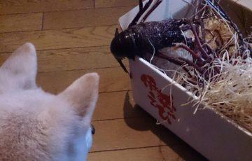 エビ カニ 甲殻類 適量