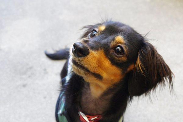 犬 膵炎 症状 再発