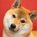 犬 アジソン病 原因 症状