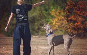 大型犬 子犬 しつけ 注意点