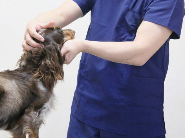 歯周病 犬 治療法