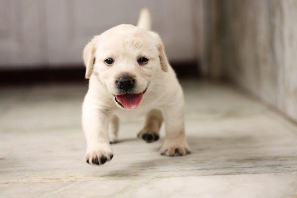 子犬 シャンプー やりかた 注意点