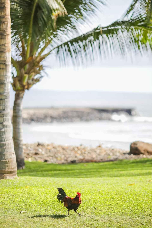 olowalu-plantation-house-maui-wedding-photographers-3