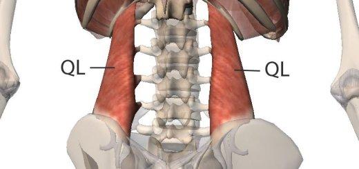 low back pain | Love Yoga Anatomy