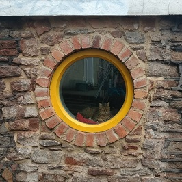love-your-things-yellow-circular-window-cat-266