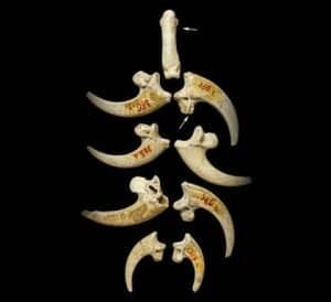 worlds oldest jewellery