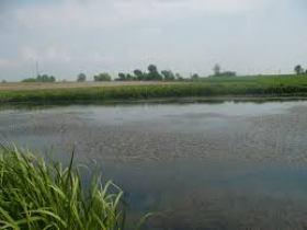 Карасевый пруд