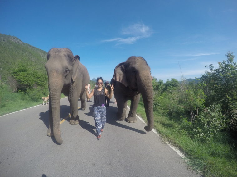 Find Out Why Riding Elephants is Elephant Cruelty