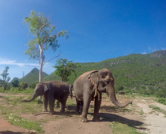 baby elephant and adult elephant hanging out
