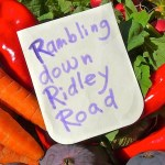 RAMBLING DOWN RIDLEY ROAD MARKET with SHOOEY
