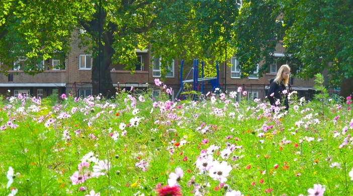 LonFieldsFloral: London Fields Park Hackney E8 3EU 091013 © david.altheer@gmail.com