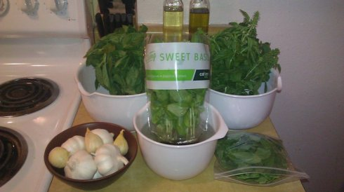 Basil, Garlic, & Olive Oil