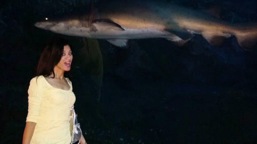 A massive shark swimming by in The Aquarium.
