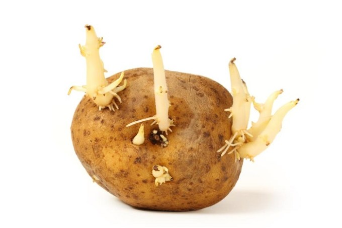 when are potatoes bad