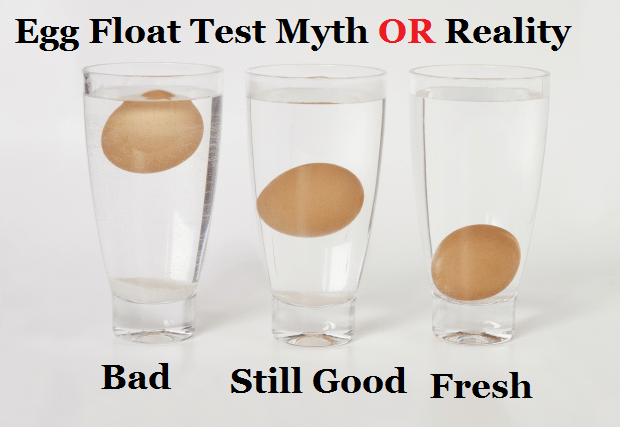 Image result for (eggs that float)