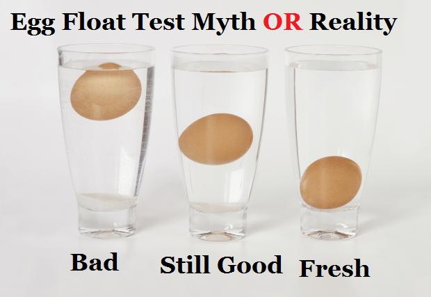 Egg Float Test Myth Or Reality