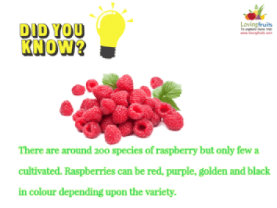 varieties of raspberries