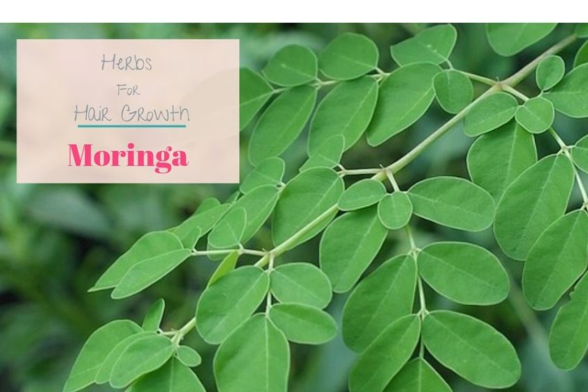 Herbs for natural hair growth - Moringa