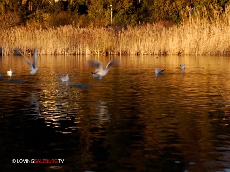 Foto: © loving Salzburg TV