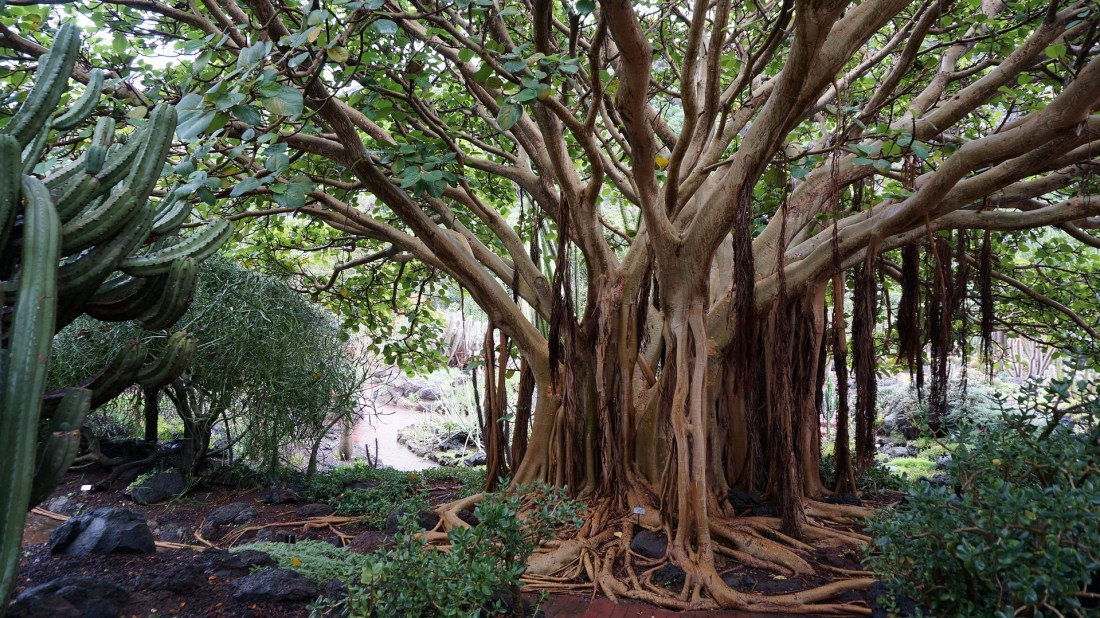 canary-islands-natural-forest