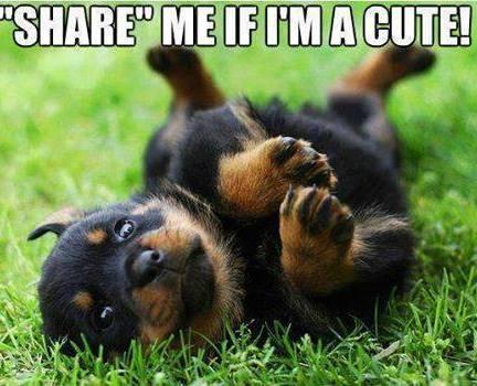Grappige honden foto's