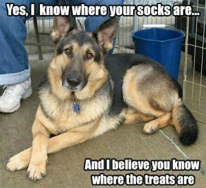 Herderhond humor