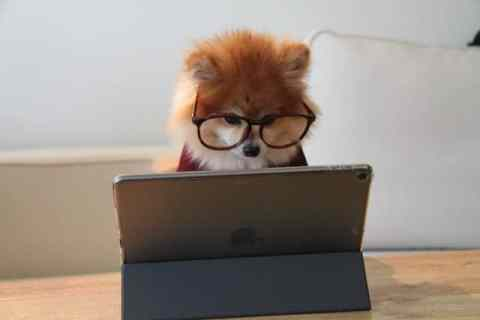 Hoe leert een hond trucjes