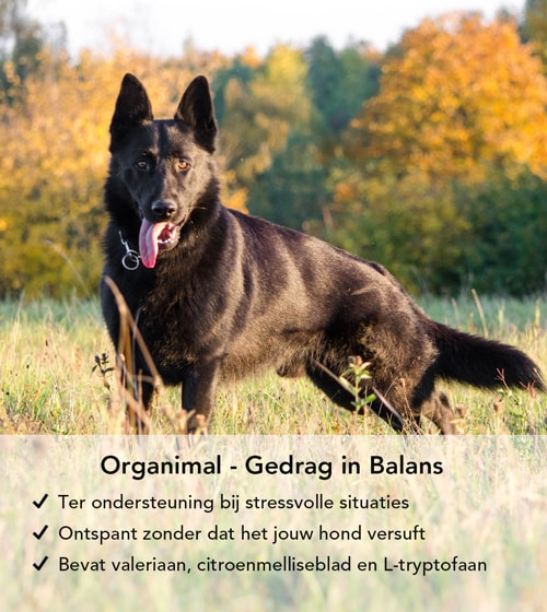 100% natuurlijke rustgevende tabletten voor honden.