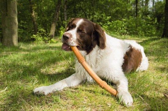 Sumo fit stick, hond leren apporteren